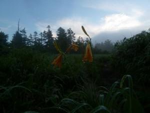 前夜に雨が降ったようで、ニッコウキスゲには雨粒が。右手に北ノ俣岳が見えてきた