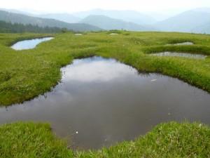 北ノ俣岳の中腹にある池塘。ここから湿地帯が続きます